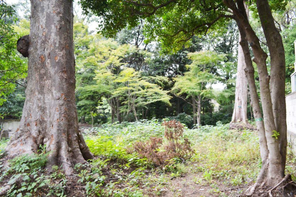 ⑩けやき公園西側新宿御苑に接する空地