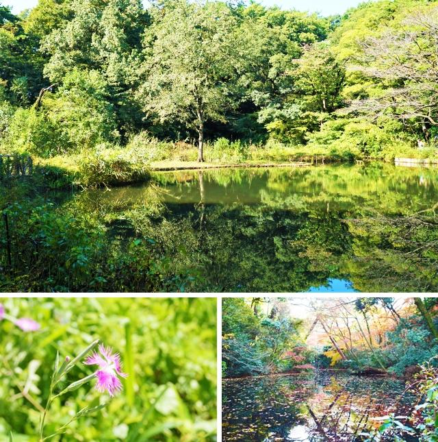 自然教育園-vert