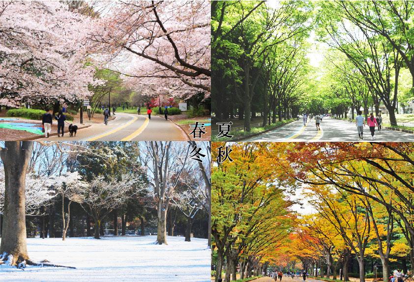 駒沢公園四季